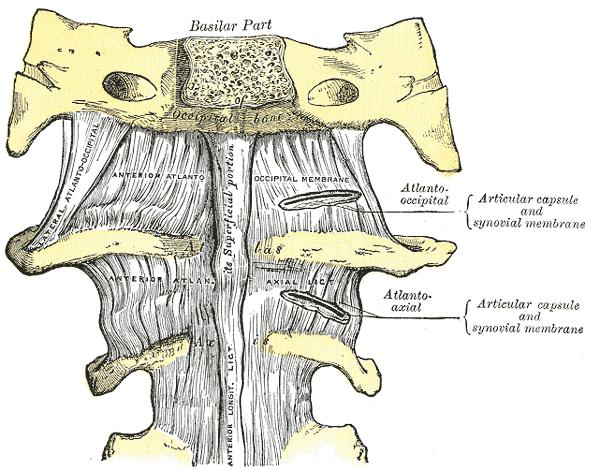 mali sklepi vratne hrbtenice